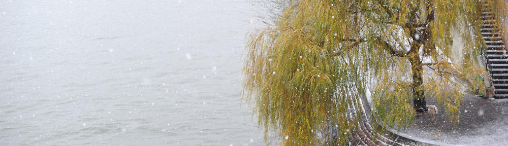 Better Homes & Gardens Real Estate All Seasons
